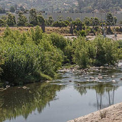Everyone Into The Water! L.A. River to open to kayakers, bird watchers, anglers and hikers this summer