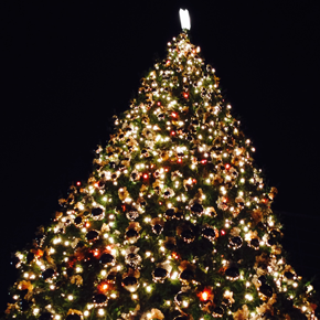 Recycle your Christmas Tree – Green Bin, Curbside (on collection day) or *Drop-off(1/5/2014)