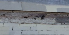 Active Bee Colony embedded within the wall of the 'Missions Lab' facility along the LA river Pedestrian BikePath