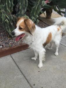 2015-06-11-lost dog